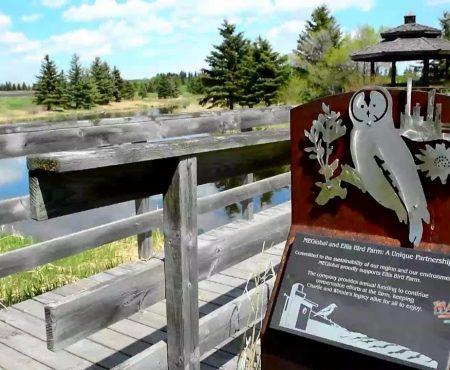 Ellis Bird Farm A Hidden Gem in Central Alberta
